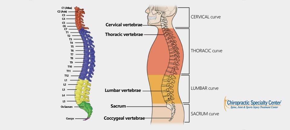 Our Scoliosis Treatment Targets your Spine Column